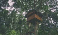 Treehouse Refuge